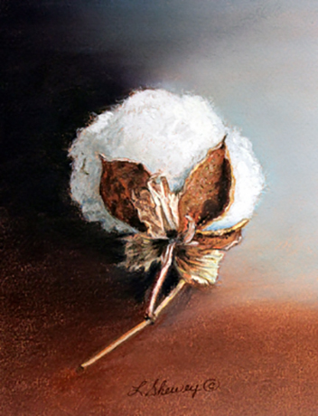 Cotton Boll II